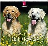 GOLDEN RETRIEVER: Original Stürtz-Kalender 2018 - Mittelformat-Kalender 33 x 31 cm