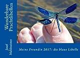 Meine Freundin 2017: die blaue Libelle (Dragonflies, Band 2)