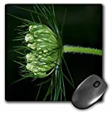 Rebecca Anne Grant Photography Nature Flowers - Beautiful White Flower 2 Green Background - MousePad (mp_21639_1)