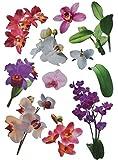 Unbekannt XXL Wandtattoo / Sticker - Orchideen Blüten mit Stengel - Blüte Blumen - selbstklebend für Wohnzimmer und Deko Wandsticker Aufkleber Orchideenzweig Orchidee