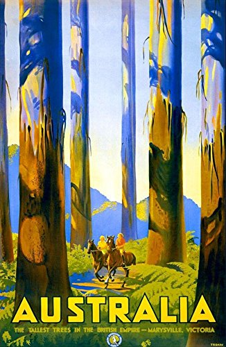 australia-the-tallest-trees-wonderful-a4-glossy-art-print-taken-from-a-rare-vintage-travel-poster