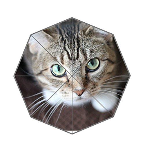 verstärkte Rahmen Tragbare winddichte Porzellan Katze Stil Regenschirm (Color-4) (Katze Halloween Ideen)