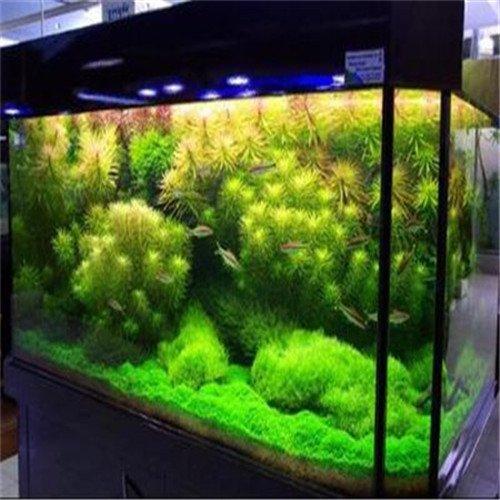 500pcs Jardin des plantes / sac aquatiques graines corallien d'herbe, l'eau rare, décoration aquarium décoration, Bonsai Seed