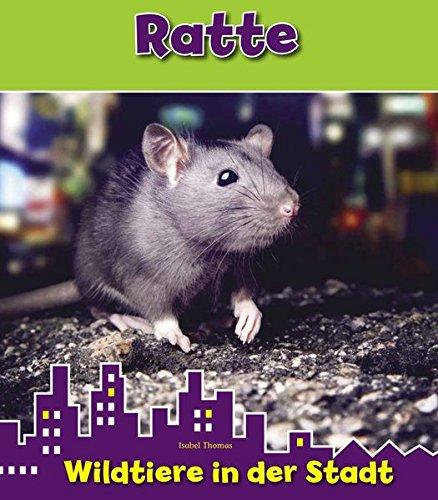 Ratte, WIldtiere in der Stadt