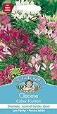 Mr Fothergills Pilzsporen, Blume Spinnenblume Colour Fountain 250 Samen