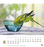 Freche Wellensittiche Postkartenkalender – Kalender 2017 - 7