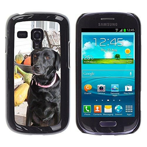 Grand Phone Cases Bild Hart Handy Schwarz Schutz Case Cover Schale Etui // M00142163 Hunde Fall-Herbst-Haustiertier, Welpe // Samsung Galaxy S3 MINI i8190 (Welpe Samsung S3 Galaxy Fall)