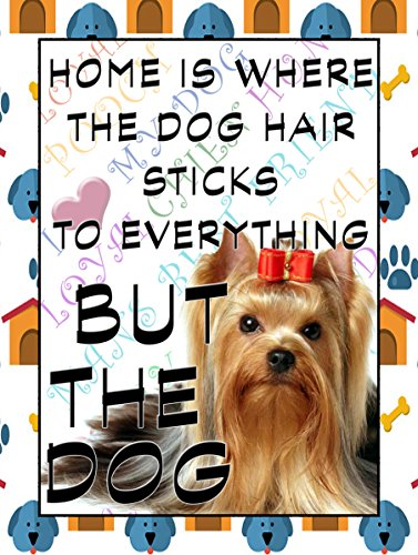 Australian Silky Terrier K?hlschrank Magnet 100?mm x 75?mm Home is where the dog Hair Sticks der Hund zu Neuheit Geschenk -