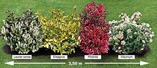 la-haie-persistante-4-arbustes