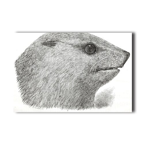 seal-head-drawing-print-wall-sticker-20x30-inch-for-home-room-school-decor