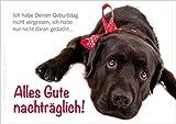 3 Stück Doppelkarte mit Kuvert Tierpostkarte Postkarte Hund Glückwunschkarte Geburtstagskarte