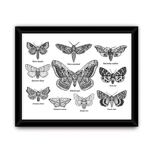 DekoShop Bild mit Rahmen Vlies Wandbild Kunstdruck Schmetterlinge AMDPF11942B2 B2 (24cm. x 30cm.) Gerahmte Bilder Abstraktion und Kunst Gerahmte Poster -