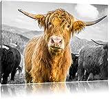Niedlicher Blick einer Kuh an der Weide B&W Detail, Format: 120x80 auf Leinwand, XXL riesige Bilder fertig gerahmt mit Keilrahmen, Kunstdruck auf Wandbild mit Rahmen, günstiger als Gemälde oder Ölbild, kein Poster oder Plakat