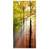Flächenvorhang Set Morning Light Wald Bäume Sonnenstrahl Herbst Natur 250x120cm | Schiebegardine Schiebevorhang Raumtrenner Vorhang Raumteiler Gardine Paravent Wandbild XXL Deko Dekor Größe: 250 x 120cm ohne Halterung