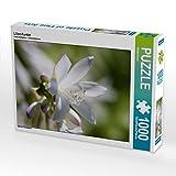 Lilien-Funkie 1000 Teile Puzzle quer (CALVENDO Natur)