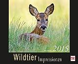 Wildtier Impressionen Kalender 2015