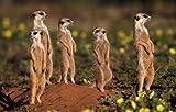 Image de South Africa (Photographer)
