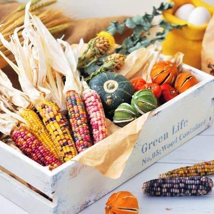 Monsterzeug Regenbogenmais Anzuchtset, Bunter Mais Saatgut, Bunter Maiskolben, Rainbow corn, Maissamen zum Züchten, DIY Zuchtset