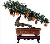 20pcs / bag Melograno Mini Bonsai domestica dei semi delle piante Delicious Frutta Seme grande e dolce per il giardino domestico Guardare germinazione delle piante il 95%