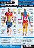 Poster, Wandchart, A3 (laminiert), Muskelgruppen und Übungen, mit Onlinevideo...