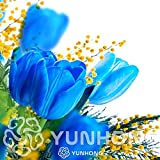 Petsdelite Bulbi di tulipani blu (non tulipano bonsai), 5 pezzi di bulbiÂ