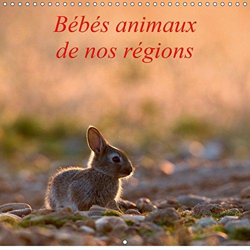 Bebes animaux de nos regions 2019: L'insouciance des bebes animaux photographies sur le vif.