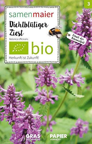 Samen Maier 3002 Dichtblütiger Ziest (Bio-Wildblumensamen)
