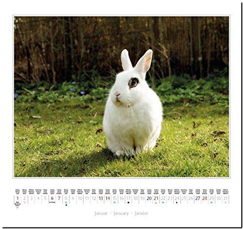 KANINCHEN: Original Stürtz-Kalender 2018 – Mittelformat-Kalender 33 x 31 cm - 3