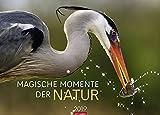 Magische Momente der Natur - Kalender 2019: Die schönsten Tierfotografien