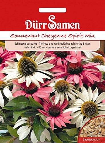 Echinacea-mix (Echinacea Primadonna Mix Sonnenhut)
