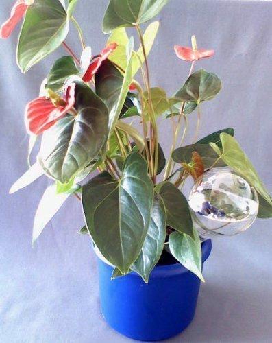 Durstkugeln 8 Stück Bewässerungskugeln 9 cm Durstkugel Pflanzensitter DKJ