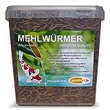 pondovit Mehlwürmer Premiumsnack für Kois, Leckerbissen, 5 l