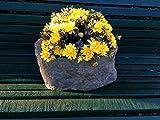 Antikas - Pflanzkübel wie alter Trog, Steintrog wetterfest rustikal Pflanzkasten Blumen