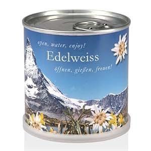 Extragoods Edelweiß aus der Dose | Alpenpanorma aus der Dose – Dosenblume als schöne Oster- und Frühlings-Dekoration für die Wohnung oder Geschenk zum Einzug.