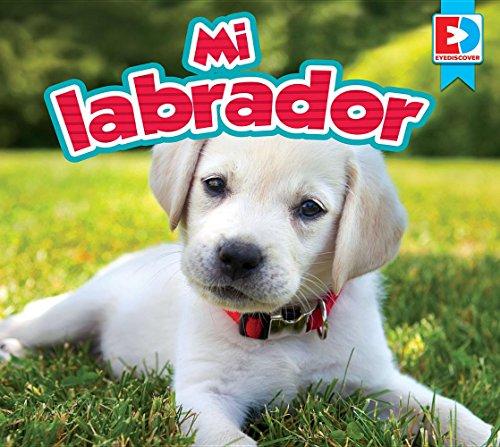 Mi Labrador (EyeDiscover)