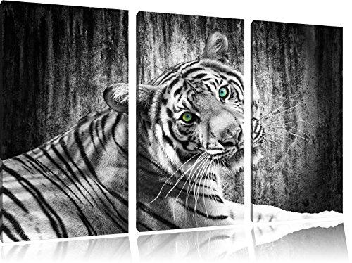 bello curioso Tiger bianco / nero su 120x80 immagine su tela 3 pezzi tela di canapa, grande XXL Immagini completamente Pagina con la barella, stampa d'arte su murale con la struttura, gänstiger come la pittura o pittura ad olio, nessun manifesto o poster