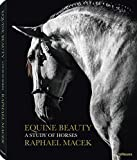 Equine Beauty - A Study of Horses