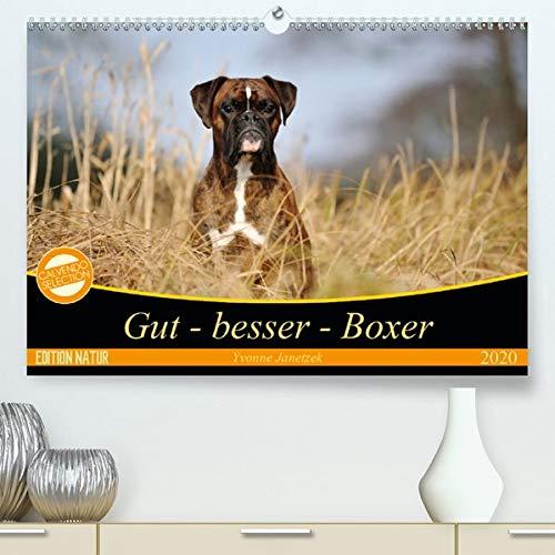 Gut - besser - Boxer(Premium, hochwertiger DIN A2 Wandkalender 2020, Kunstdruck in Hochglanz): Boxer, einzigartige Hunde (Monatskalender, 14 Seiten ) (CALVENDO Tiere) -