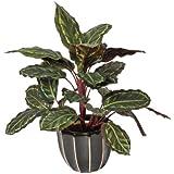 Planta artificial galatea cebra 49 cm altura, Catral 74010016
