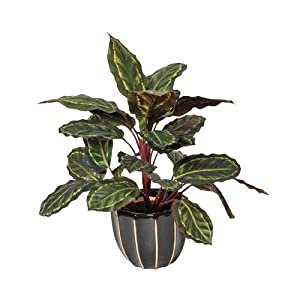 Planta artificial galatea cebra 49 cm altura, Catral 74010016