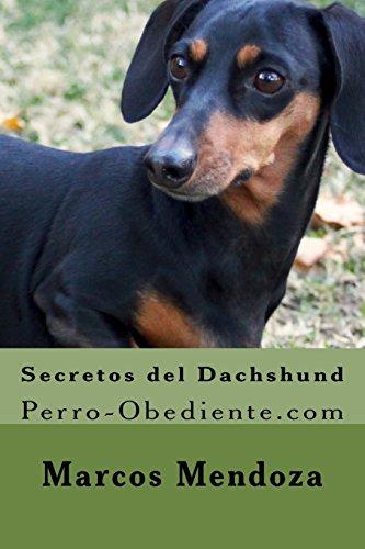 Secretos del Dachshund: Perro-Obediente.com