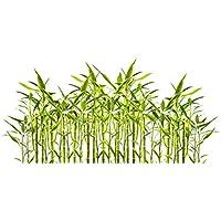 Bambú gigante (bambú moso) / 50