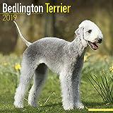 Bedlington Terrier Calendar 2019
