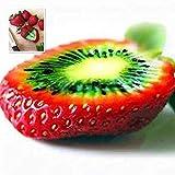 Tomasa Samenhaus- Seltene Erdbeerkiwi Samen,Raritäten Obstsamen Bio-Fruchtsamen Strawberry Kiwi organischer Frucht Samen Hausgarten