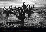 VIGNES DU SUD terroirs d'AOC 2019: Paysages des terroirs viticoles AOC du sud de la France