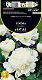 Semillas Batlle–Bulbe Pivoine Blanc