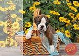 Deutscher Boxer 2019 (Tischkalender 2019 DIN A5 quer): Jahreskalender 2015 mit 13 Fotos der Hunderasse Deutscher Boxer (Monatskalender, 14 Seiten ) (CALVENDO Tiere)