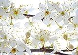 Tischsets Platzsets abwaschbar Blütenweiss von ARTIPICS 4er-Set Kunststoff 30x42 cm