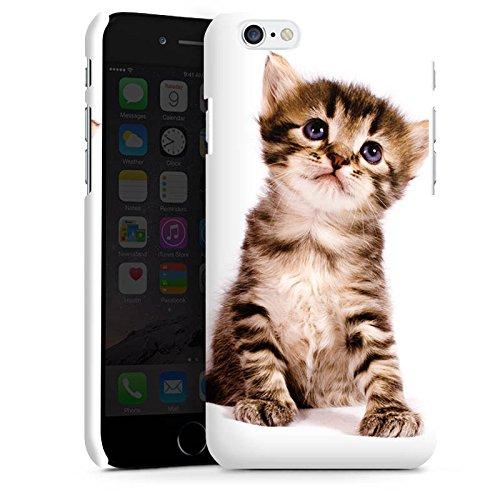 Apple iPhone 5c Hülle Premium Case Cover Katze Katzenbaby Kätzchen Kitten Premium Case matt