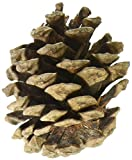 Natural Red Pinecones 7oz-